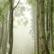 Forest trail during rainfall — Stock Photo