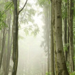 Stock Photo: Forest trail during rainfall