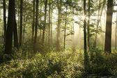 Spring deciduous forest at dawn — Stock Photo