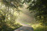 Misty deciduous forest at dawn — Stock Photo
