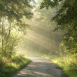 Morning sunlight enters misty summer woods — Stock Photo