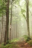 Forest trail in the fog — Foto Stock