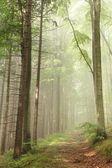 Trilha da floresta no nevoeiro — Foto Stock