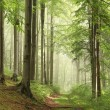 Forest trail in the fog — Stock Photo #6675581