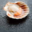 Raw scallop on black stone background - Stock Photo