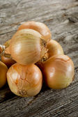 String of onions — Stock Photo