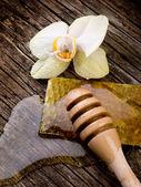 Miel con cera de abeja y la flor — Foto de Stock