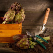 Artichoke with garden tools — Stock Photo