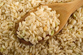 Whole rice over wood spoon — Stock Photo