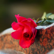 Rose on the tombstone — Stock Photo #6573457