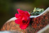 Rose auf dem grabstein — Stockfoto