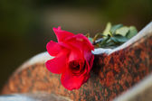Rose on the tombstone — 图库照片