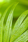 Tropical Palm Leaves and Rain Drops — Stock Photo