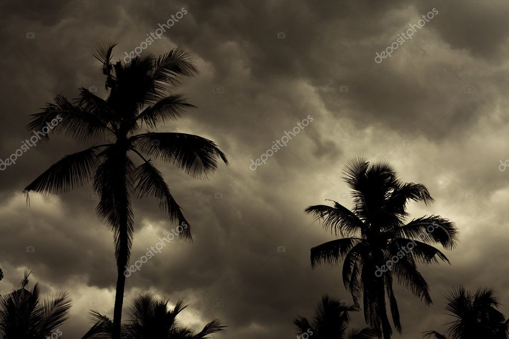 the beauty of the tropical monsoon Download this heavy tropical rain during monsoon season in thailand video now and search more of istock's library of royalty-free stock video footage that features.