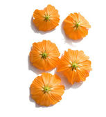 Sunny Orange Upturned Flowers — Stock Photo