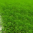White line on soccer field — Stockfoto