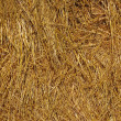 Hay texture — Stock Photo #5410805