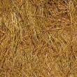 Hay texture - Stock Photo