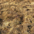 Dry field — Stock Photo