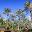 Park in Montaza Palace in Alexandria, Egypt. — Stock Photo