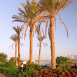 Stock Photo: Early morning and palm-tree . Sunrise. Egypt