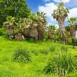 Tropical park in Arboretum ,Sochi city — Stock Photo