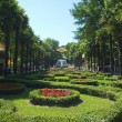 Park Riviera in Sochi city, - Stock Photo