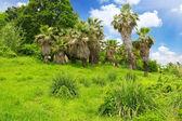 Tropical park in Arboretum ,Sochi city — Stock Photo