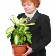 Stock Photo: Friendly senior womwith house plant, flowers