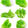 Collage Leaf of lettuce on white . Isolated - Stock Photo