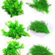 Collage  of Fresh parsley on white.Isolated - Stock Photo