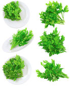 Collage of Fresh parsley on white.Isolated — Stock Photo