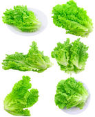 Collage Leaf of lettuce on white . Isolated — Stock Photo