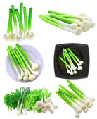 Collage (set) of young garlic on white. Isolated — Stock Photo
