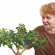 Royalty-Free Stock Photo: Senior lady wipes foliage on a plant. Isolated