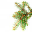 Stock Photo: Fresh green fir branches. Isolated