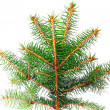 Foto de Stock  : Fresh green fir branches. Isolated