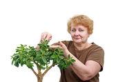 Senior lady wipes foliage on a plant. Isolated — Stock Photo