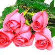 Stock Photo: Beautiful pink roses . Isolated.