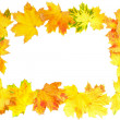 Stock Photo: Frame of Autumn Leaf over white.