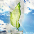 Ecology -green leaf in glass of water. — Stock Photo