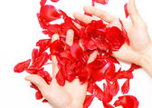 A rose petals in a hands. — Stock Photo
