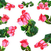 Beautiful collage of pink roses . Isolated. — Stock Photo