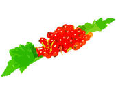 Red currant with leaf on white background. — Stock Photo