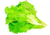 Leaf of lettuce — Stock Photo
