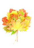 Heap of perfect Autumn Leaf over white. Isolated — Stock Photo