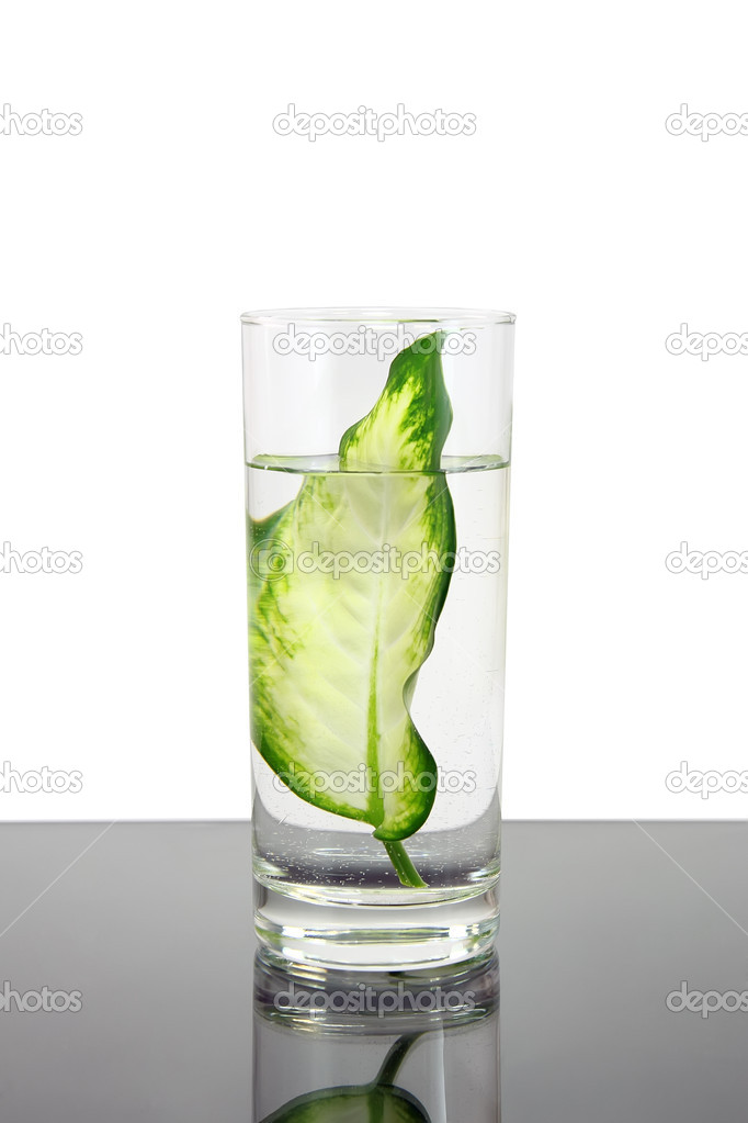 Ecology -green leaf in glass of water . Conceptual. — Stock Photo #6595500