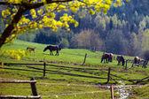 Pejzaż wiosna — Zdjęcie stockowe