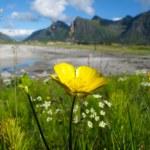 Norway landscape — Stock Photo #6636801