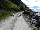 Krajina norsko — Stock fotografie